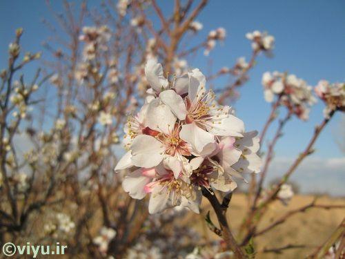 تصاویر بهاری