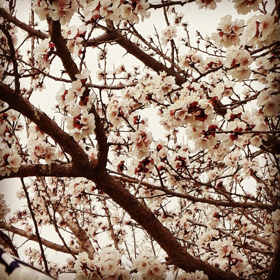 دشت پایین بهار 97